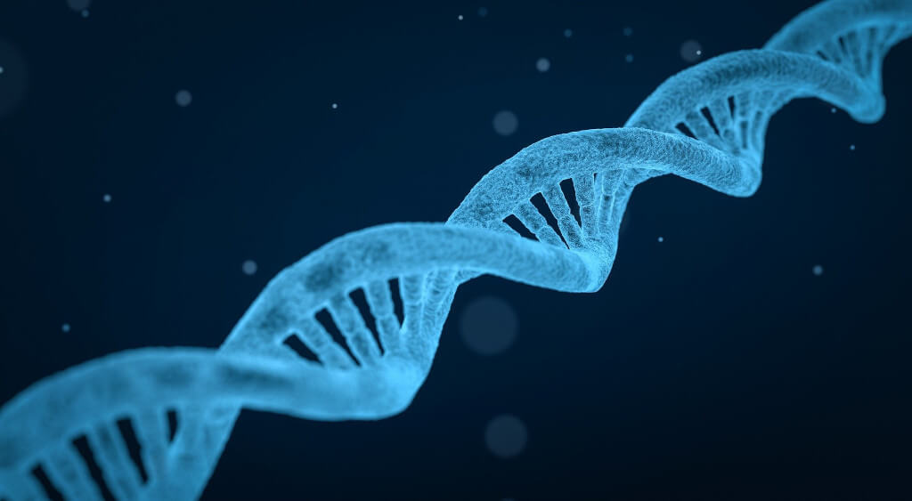 Pictura of DNA